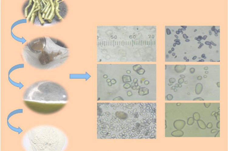 Macro-microscopic Differentiation of Guduchi Satva Samples Collected from the Market