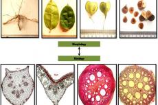 Detailed Macro-microscopic Atlas of Different Parts of a Folk Medicinal Plant Dioscorea oppositifolia L.